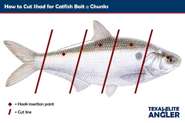 Cut bait