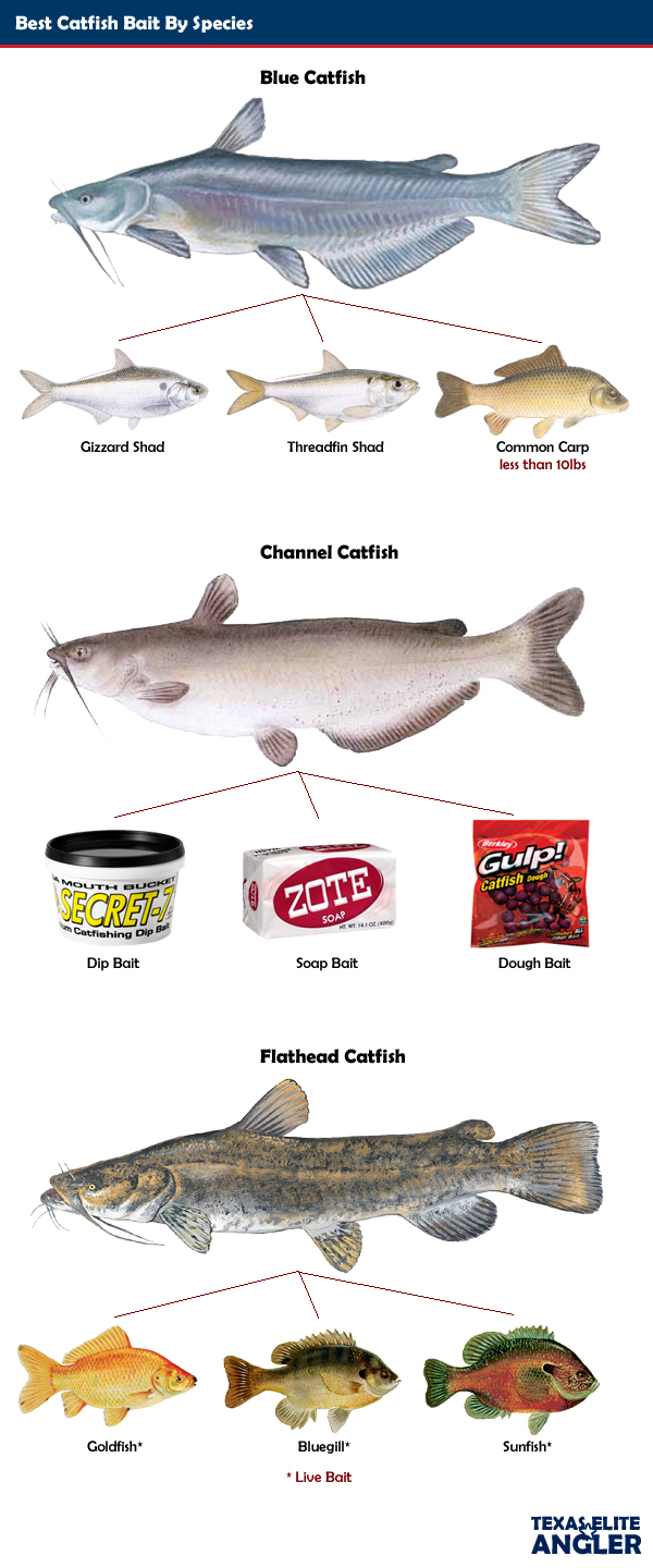 how to catch leeches for bait